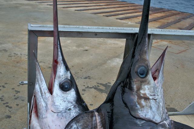 Pesca grossa al porticciolo di Alicudi